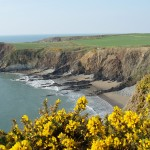Pembs-coast-path